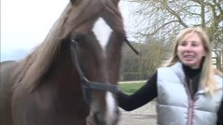 Documentaire Viande de cheval, le grand boum