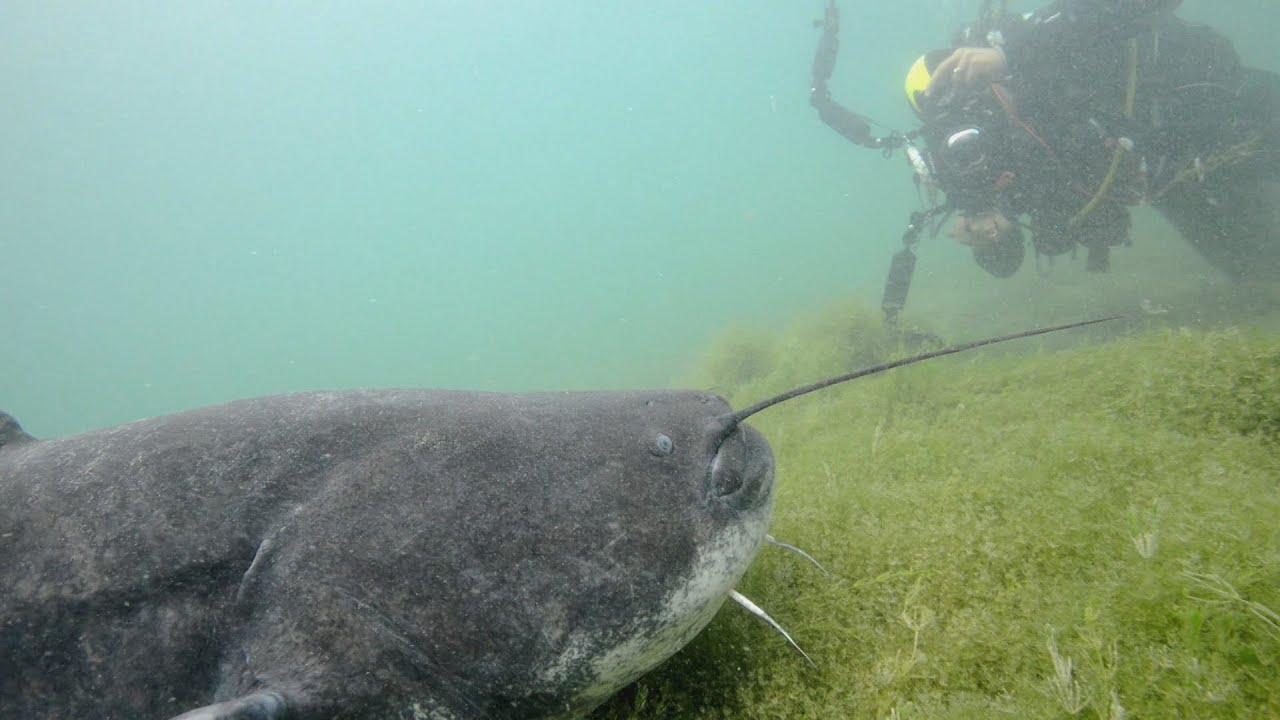 Documentaire Voyage dans les profondeurs des lacs