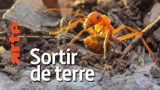 Documentaire Au royaume des fourmis | Episode 1 :  Naissance d'une fourmilière