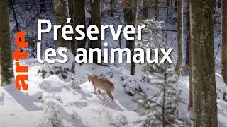 Documentaire La faune sauvage : dérangée, chassée, tuée