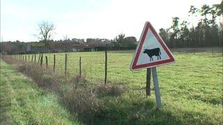 Documentaire Le mystère des tueurs de vaches