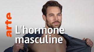 Documentaire Testostérone : une hormone pas si «mâle»