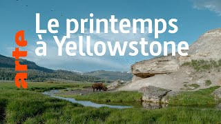 Documentaire Yellowstone: Nature extrême (3/4)