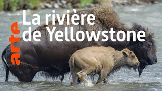 Documentaire Yellowstone: Nature extrême | (4/4)