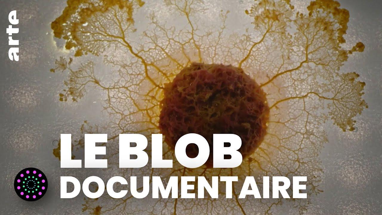 Documentaire Le blob, un génie sans cerveau