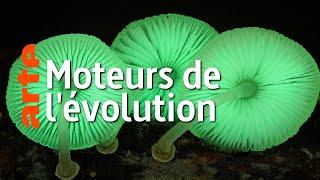 Documentaire Au royaume des champignons