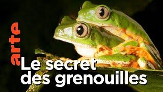 Documentaire Aventures en terre animale | La nuit des grenouilles