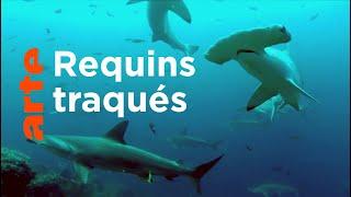 Documentaire Cocos, l'île des requins