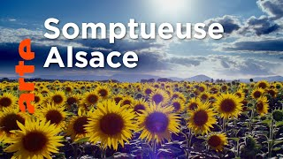 Documentaire L'Alsace sauvage
