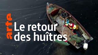 Documentaire Les huîtres de retour en mer du Nord