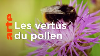 Documentaire Les pollens : sur les traces de la palynologie
