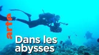 Documentaire Mammifères marins | Les maîtres des abysses