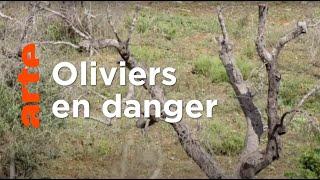 Documentaire Menaces sur l'huile d'olive