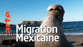 Documentaire Mexique, sur les routes des migrateurs