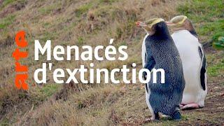 Documentaire Nouvelle-Zélande, les animaux du bout du monde