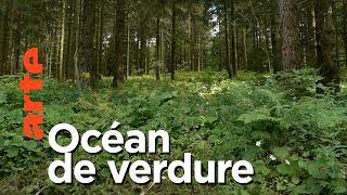 Documentaire Paysages d'ici et d'ailleurs | Forêt Noire