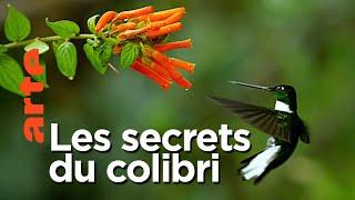 Documentaire Prodigieux colibris
