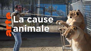 Documentaire Des militants animalistes contre les cirques