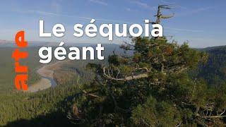 Documentaire Histoires d'arbres | Les survivants