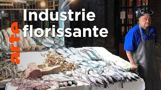 Documentaire Le saumon : juteux business qui pèse sur l'environnement