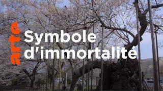 Documentaire Les Immortels | Histoires d'arbres