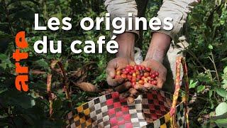 Documentaire Éthiopie, le berceau du café
