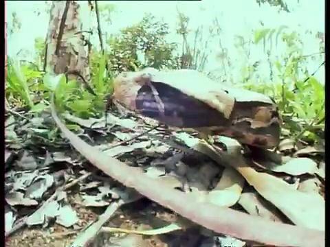 Documentaire Le maître des serpents