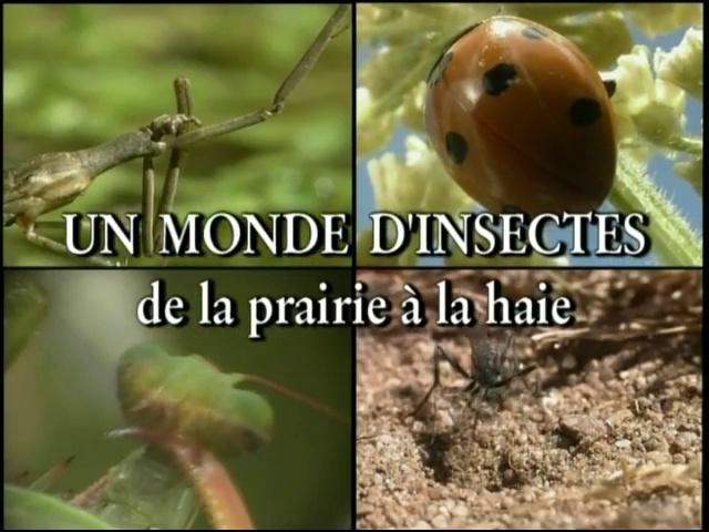 Documentaire Les insectes – De la prairie à la haie