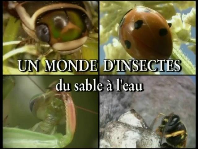 Documentaire Les insectes – Du sable à l'eau