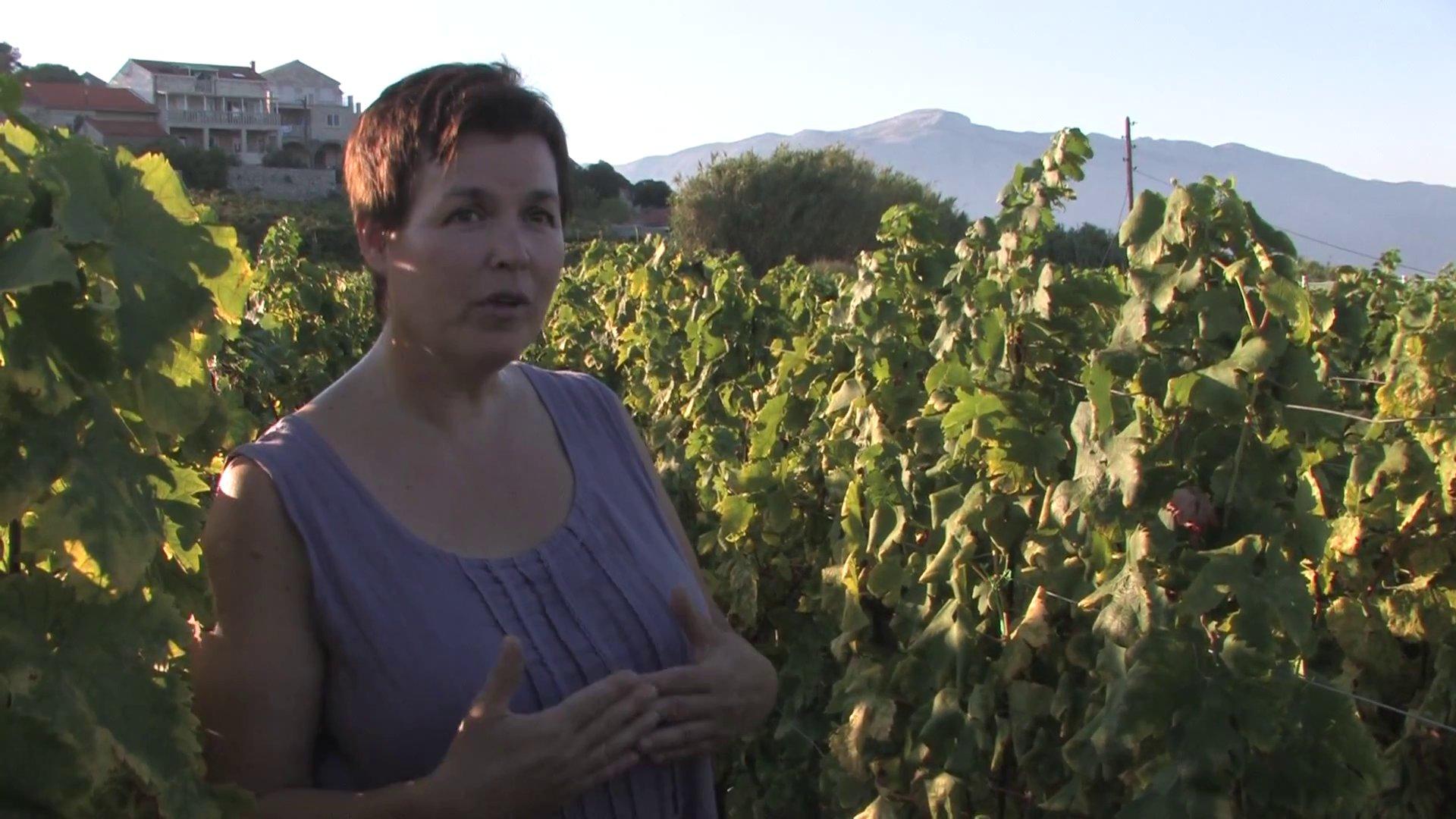 Documentaire Les îles de la Dalmatie – Un jardin au coeur de l'Adriatique