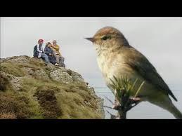Documentaire A la découverte des oiseaux migrateurs