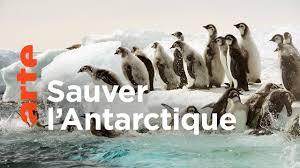 Documentaire Antarctica, sur les traces de l'empereur