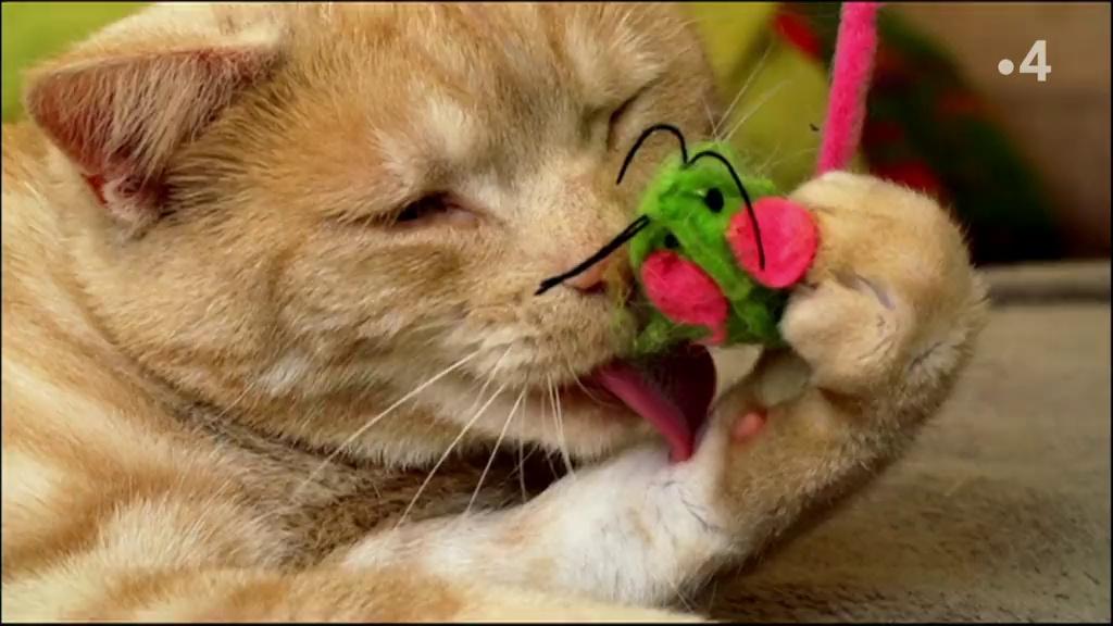 Chats des villes et chats des champs - Des fauves miniatures