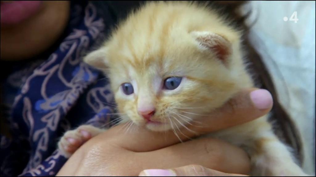 Chats des villes et chats des champs - Tous les sens en alerte