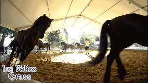 Dans les coulisses du cirque Alexis Gruss