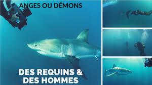 Documentaire Des requins & des hommes – Anges ou Démons