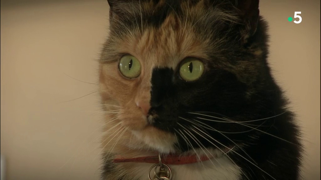 Documentaire Le chat est un animal sauvage