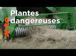 Documentaire Plantes toxiques : où se cache le danger ?