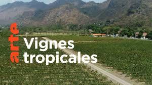 Documentaire Thaïlande : le vignoble des tropiques
