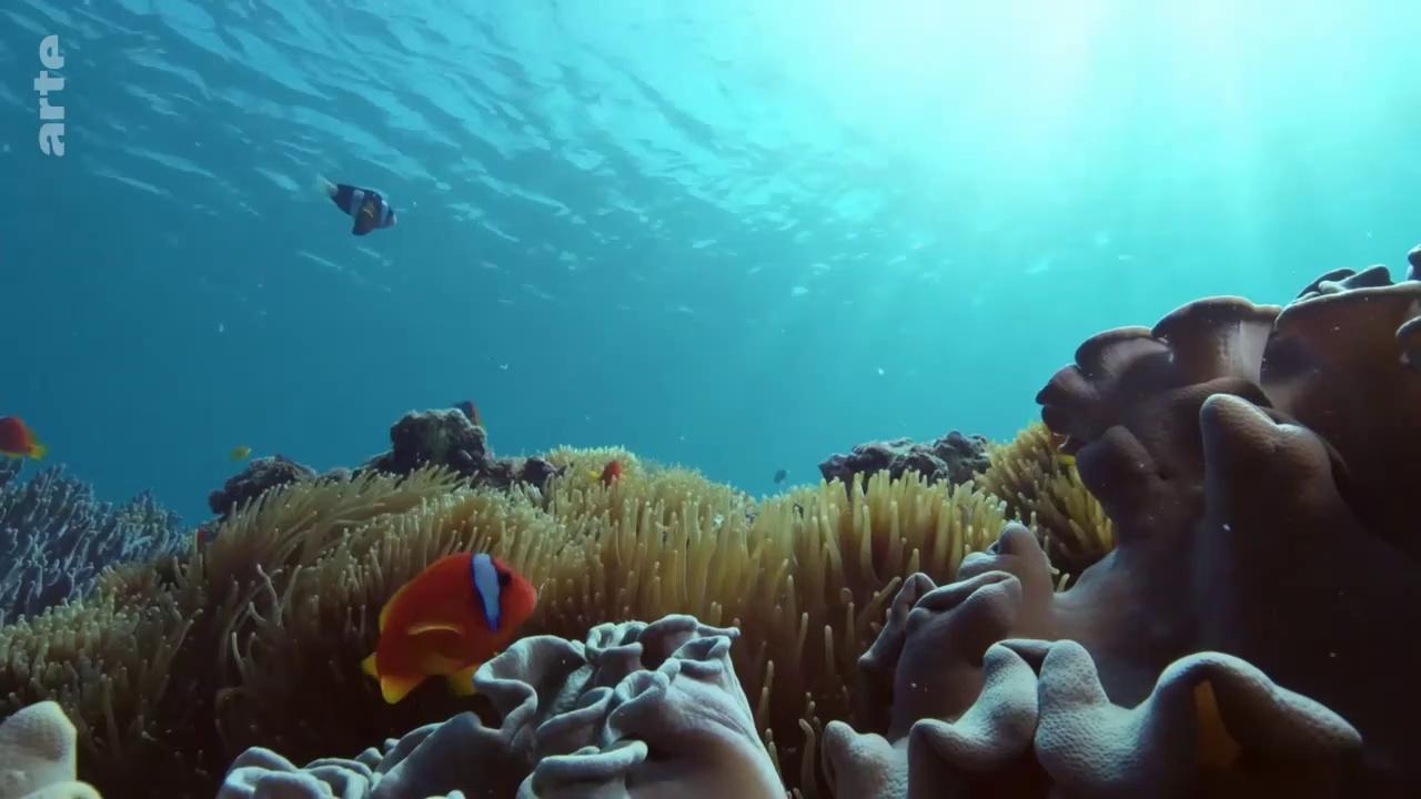 Pacifique, un océan passionné
