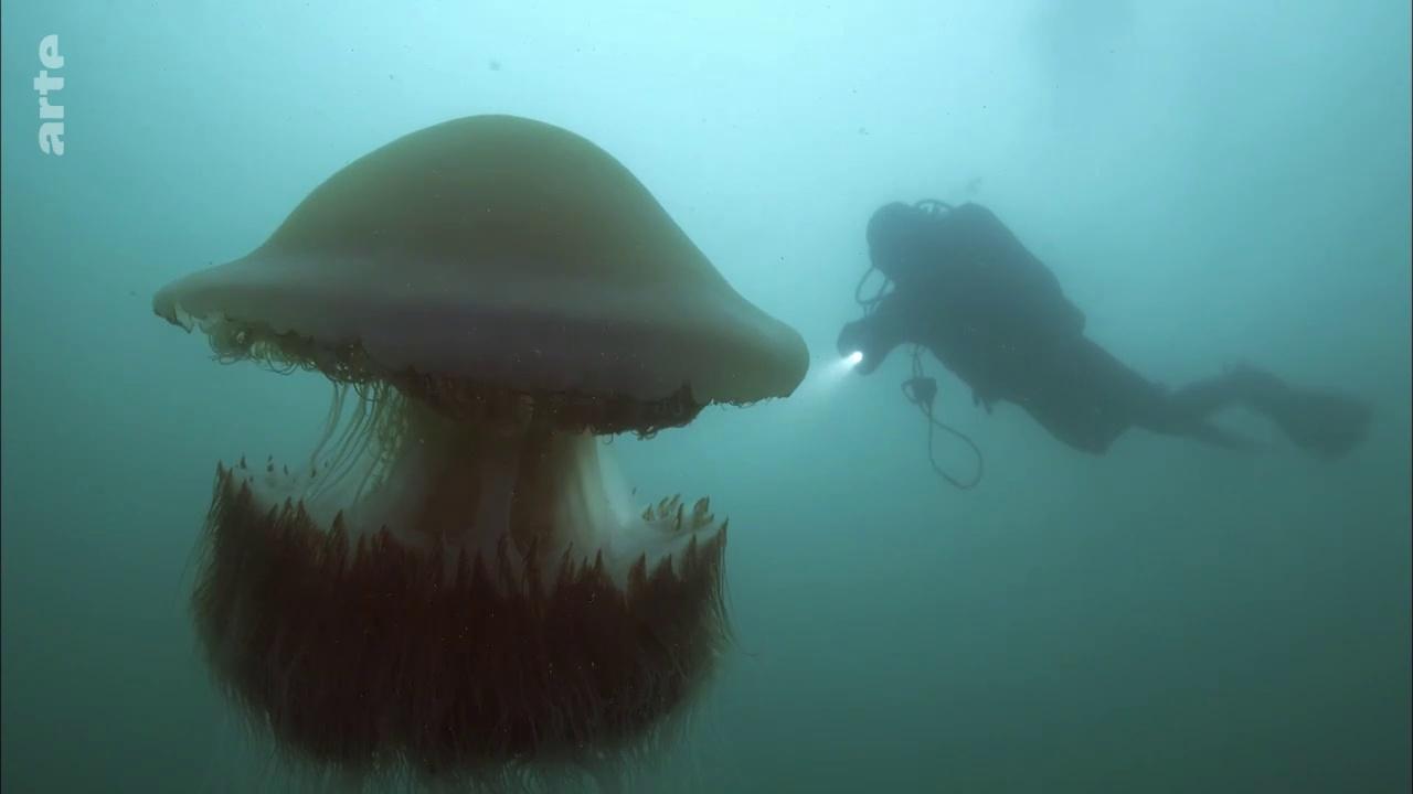 Documentaire Pacifique, un océan vorace