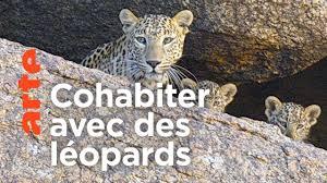Inde : les léopards des montagnes