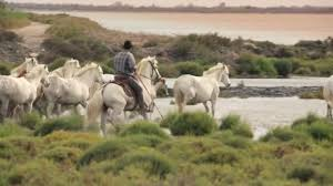 Camargue, le far west méditerranéen
