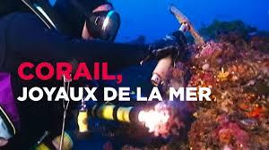 Corail, les joyaux de la mer