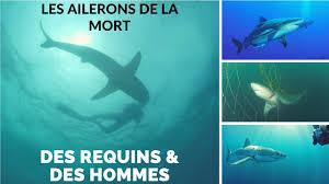 Documentaire Des requins & des hommes – Les ailerons de la mort