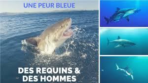 Des requins & des hommes - Une peur bleue