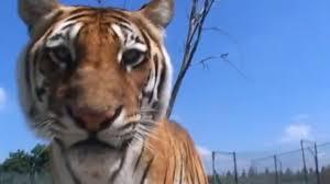 Documentaire Ils élèvent chez eux des animaux sauvages