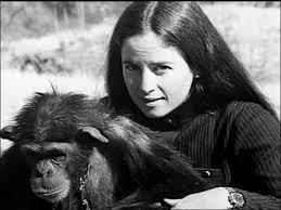 Janis Carter - pour l'amour des chimpanzés