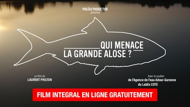 Documentaire Qui menace la grande alose ?