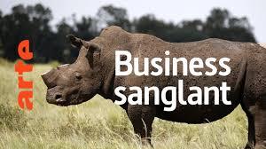 Rhino dollars : menace sur les rhinocéros